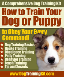How to Train Your Dog or Puppy